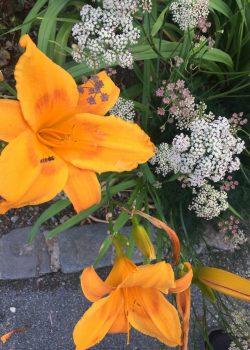 Iris im Botanischen Garten