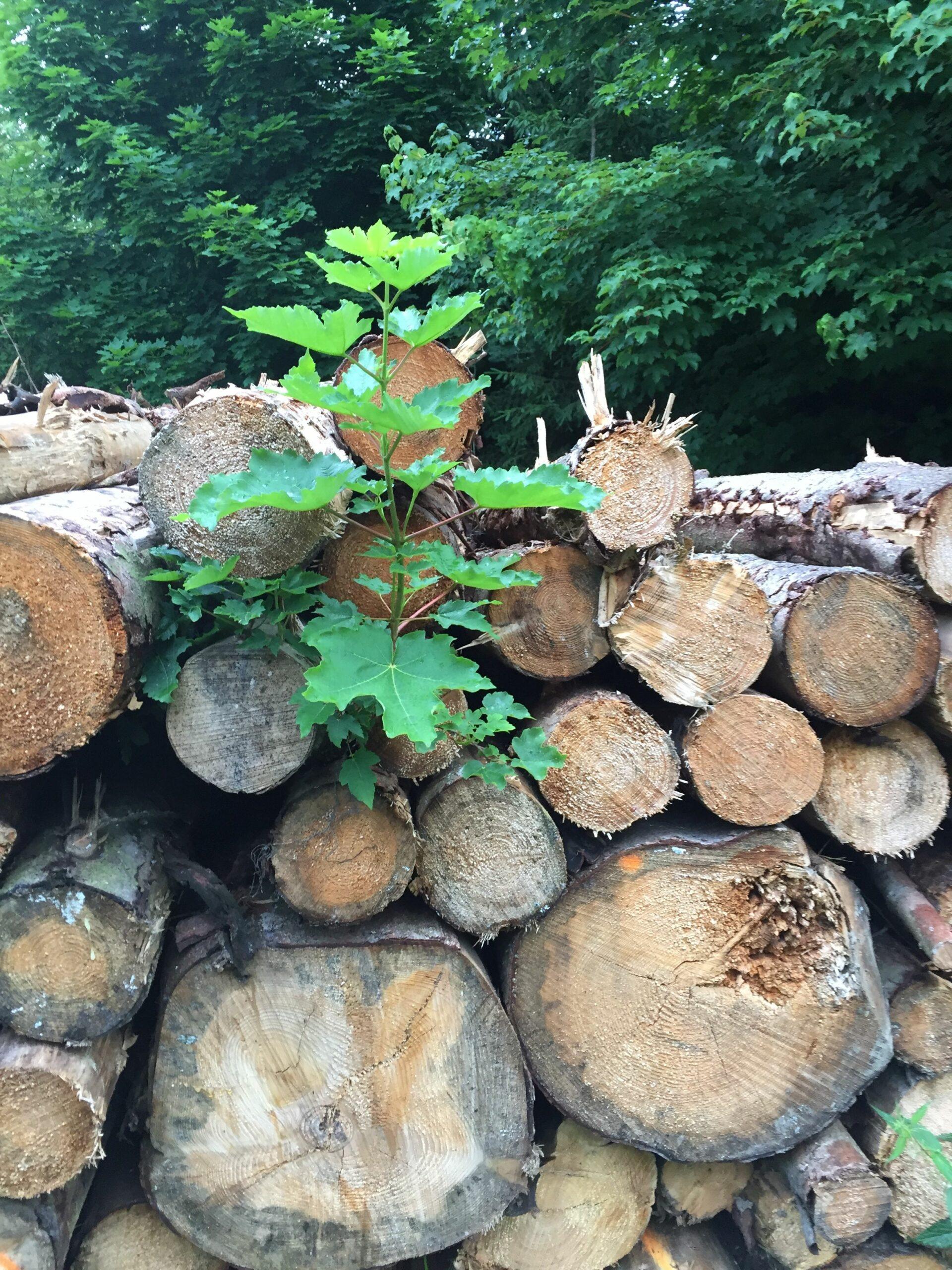 Bäumchen aus Baumstamm